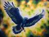 Adlerschwingen